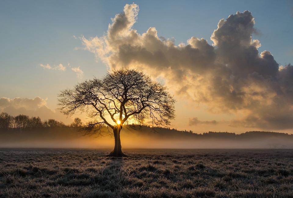 lone-tree-1934897_960_720